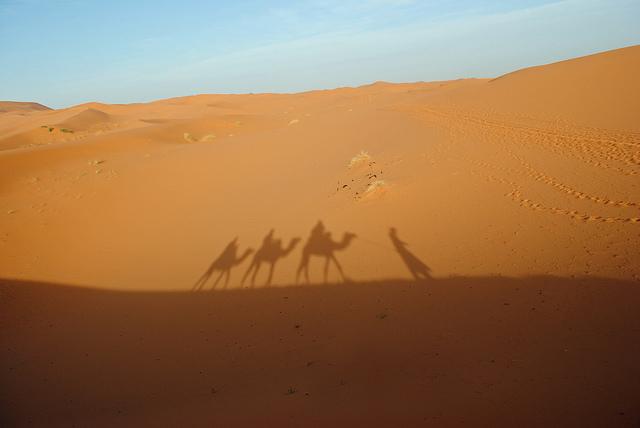 Kamelsiluetter mot ökensand