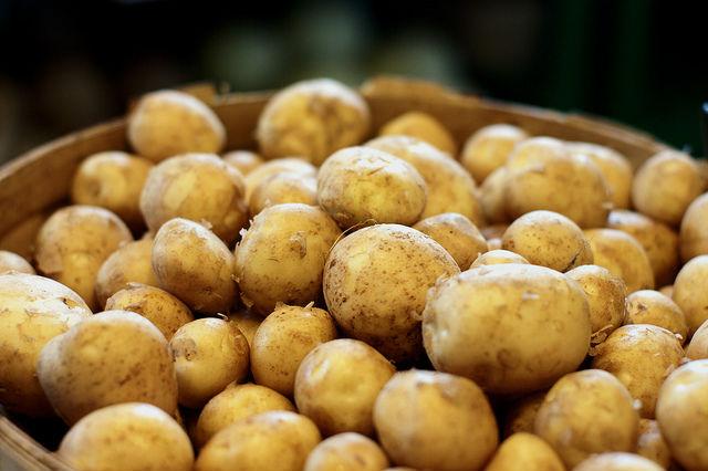Potatisar i hink