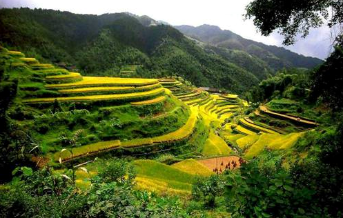 Risodling i Kina