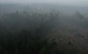 Skog som brunnit