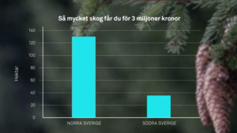 Skog som investering, så fungerar det