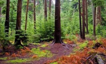 Skogsbolagen påverkas olika – Aktierna som är köpvärda