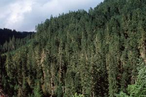 Skog och timmer - Lönsammare investering än aktier