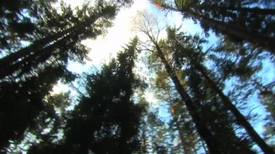 Ägarskiften av skogsfastigheter