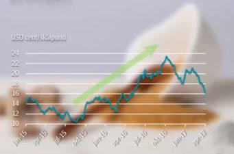Sockerpriset står inför en återhämtning