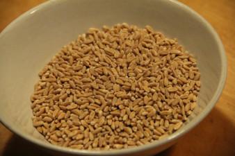 Råvarujätte tror att spannmålspriserna faller av El Niño
