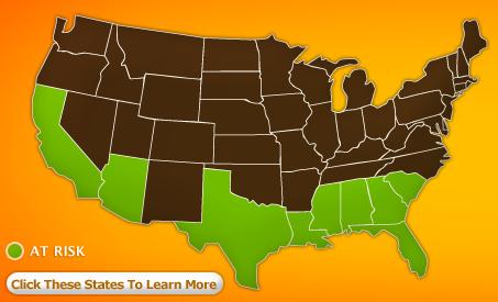 Stater i risk att drabbas av citrus greening