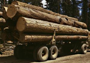 Timmer, skog och virke - Handla växande råvaror
