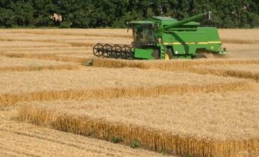 Fallande spannmålspriser uppmuntrande för boskapsuppfödare