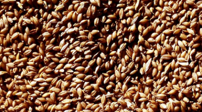 Ingemar Carlsson analyserar vetepriset