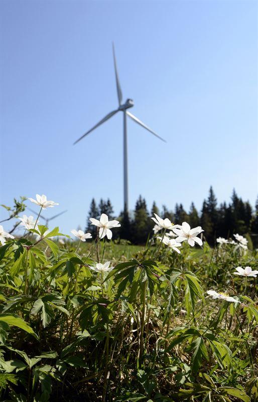 Vindkraftverk och blommor