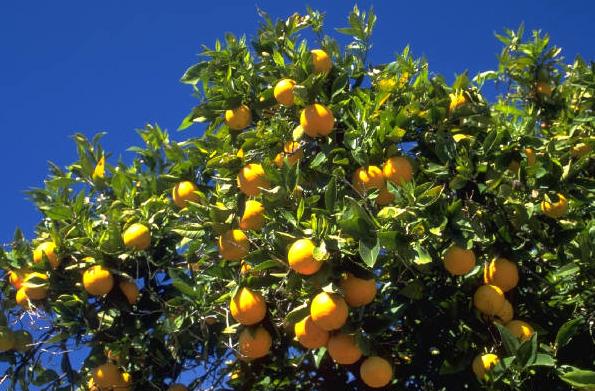 apelsinjuice-investera-trad.png