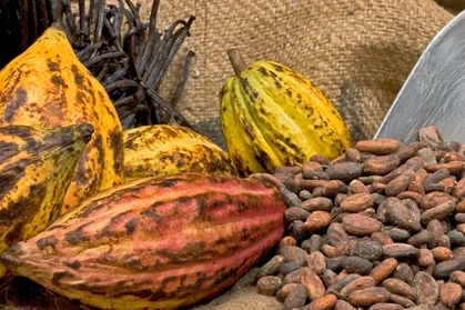 kakao-frukt-bonor-choklad-marknad-handla.png